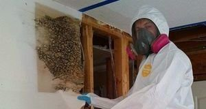 Mold Infestation Discovered In Drywall